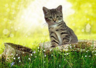 Krimi-Katze Coco im Gras